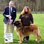 Reserve Winner's Dog, March 14, 2010